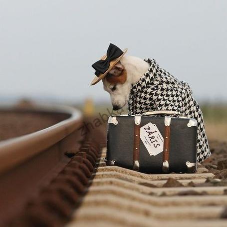 Як подорожувати з домашніми тваринами?
